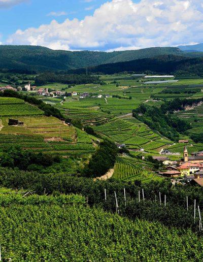 La strada del vino - scorcio su Giovo
